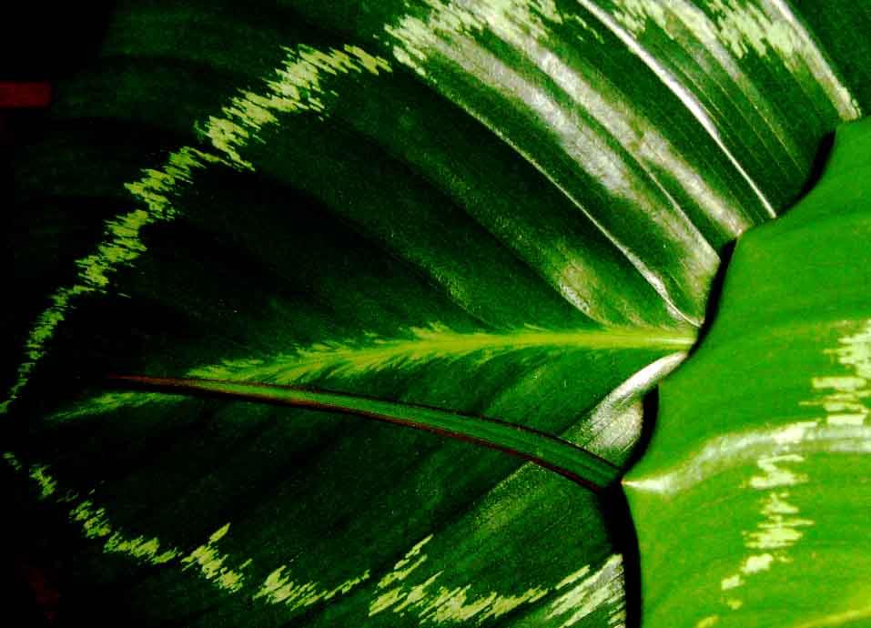 növénykardiológia