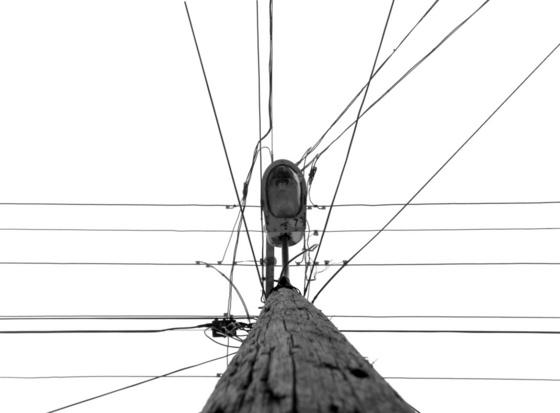 kokaeN: villany fája