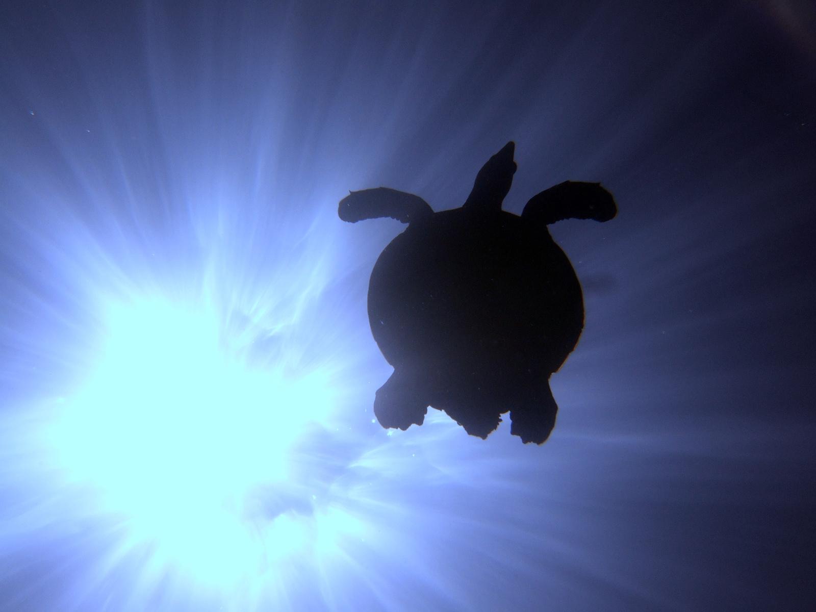 A nap és a teknős