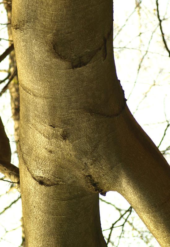 Pacsker: Erdő mélyén