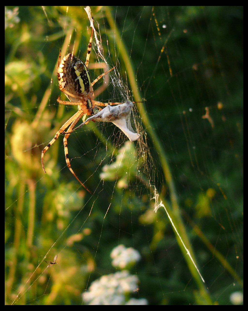 pók vacsora