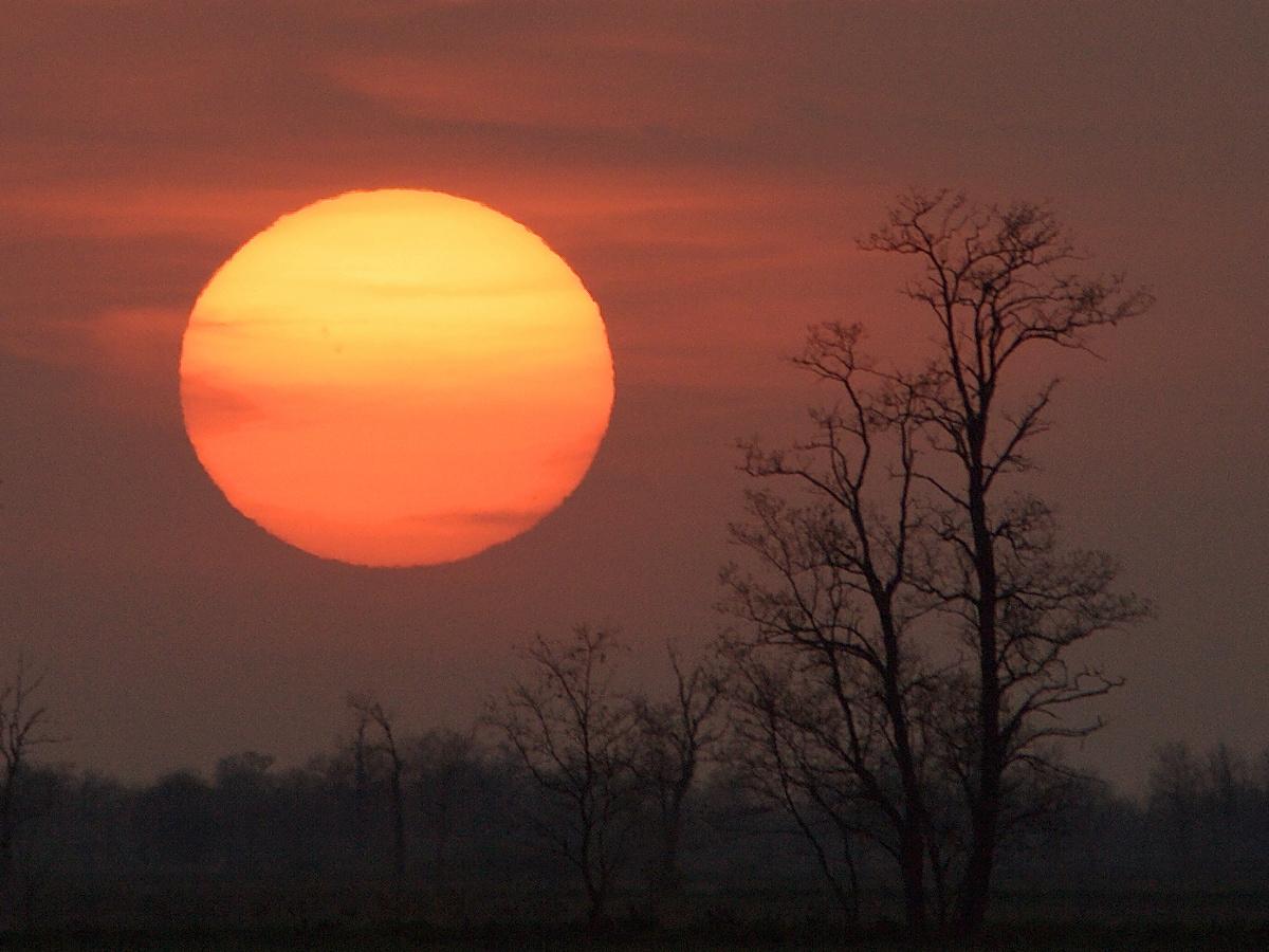 naplemente akácfákkal