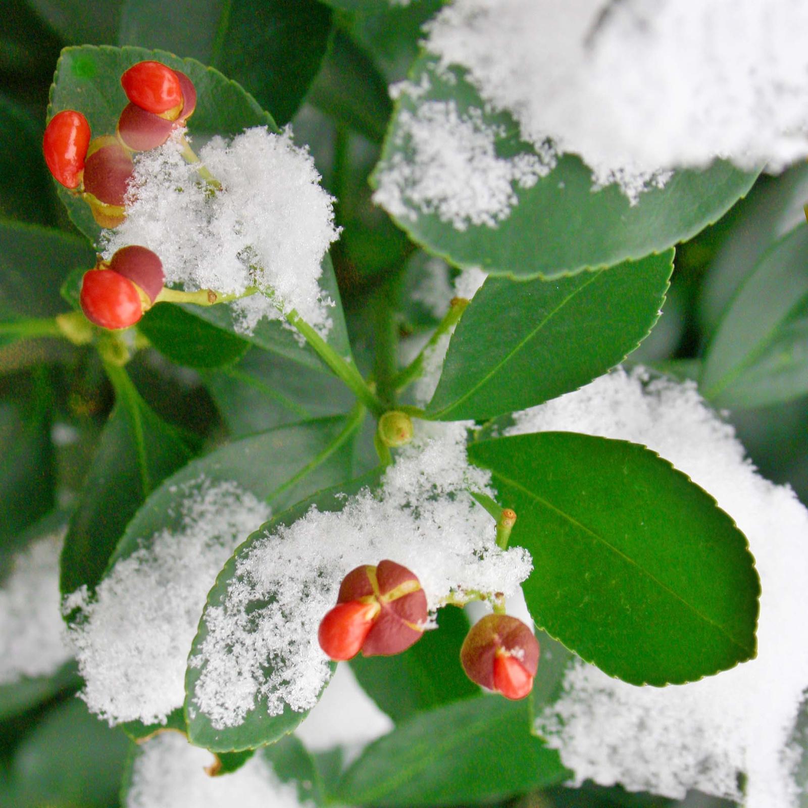 Az első hó Nr 02