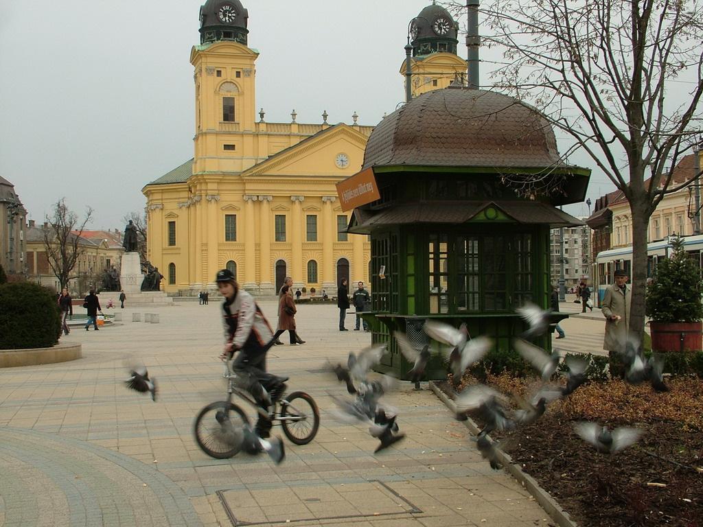 Debreceni galambok