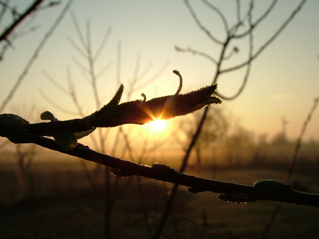 Tavaszi napkelte