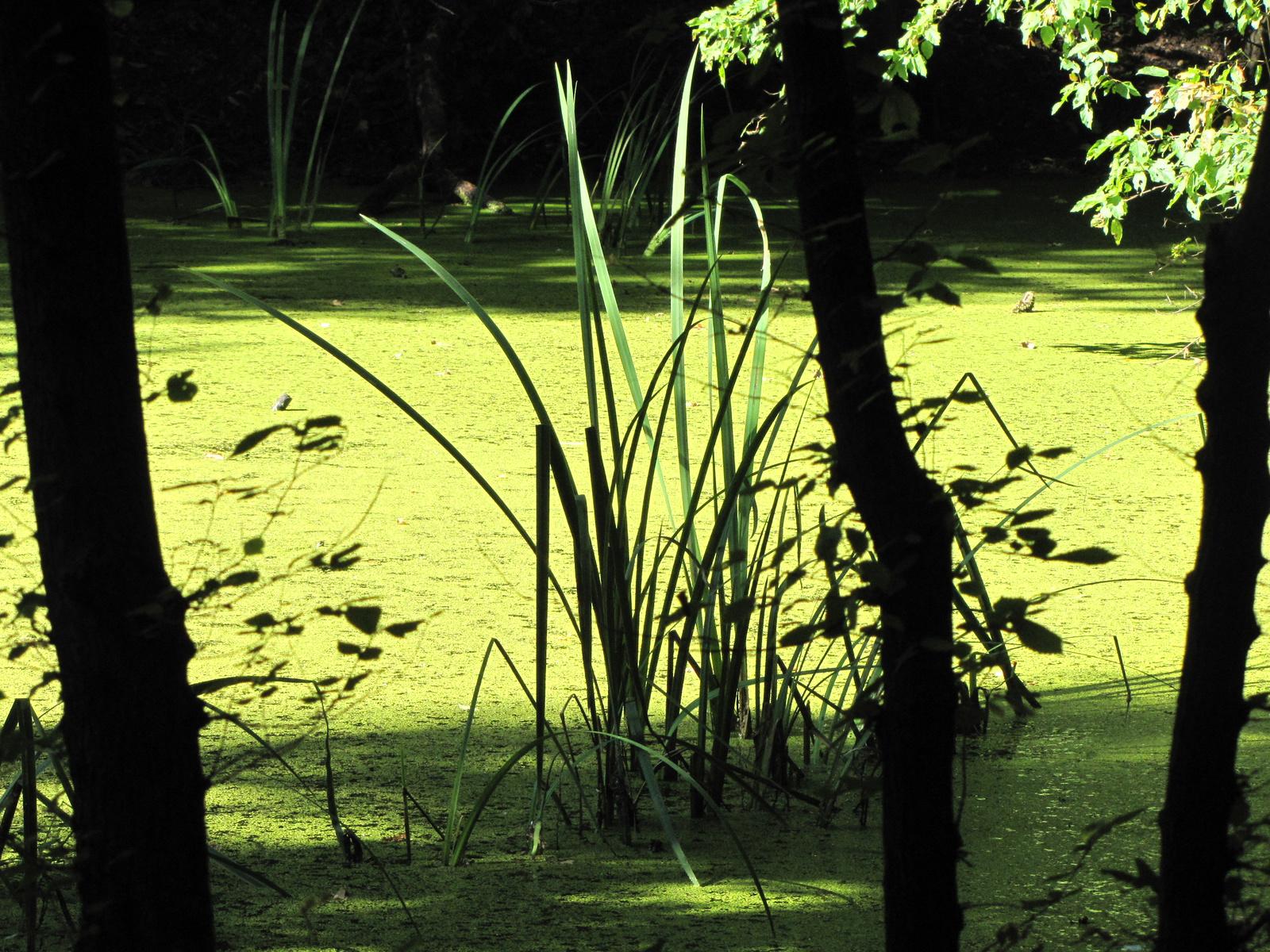 Magyarország, a Rekettyés tó a Pilisben, SzG3