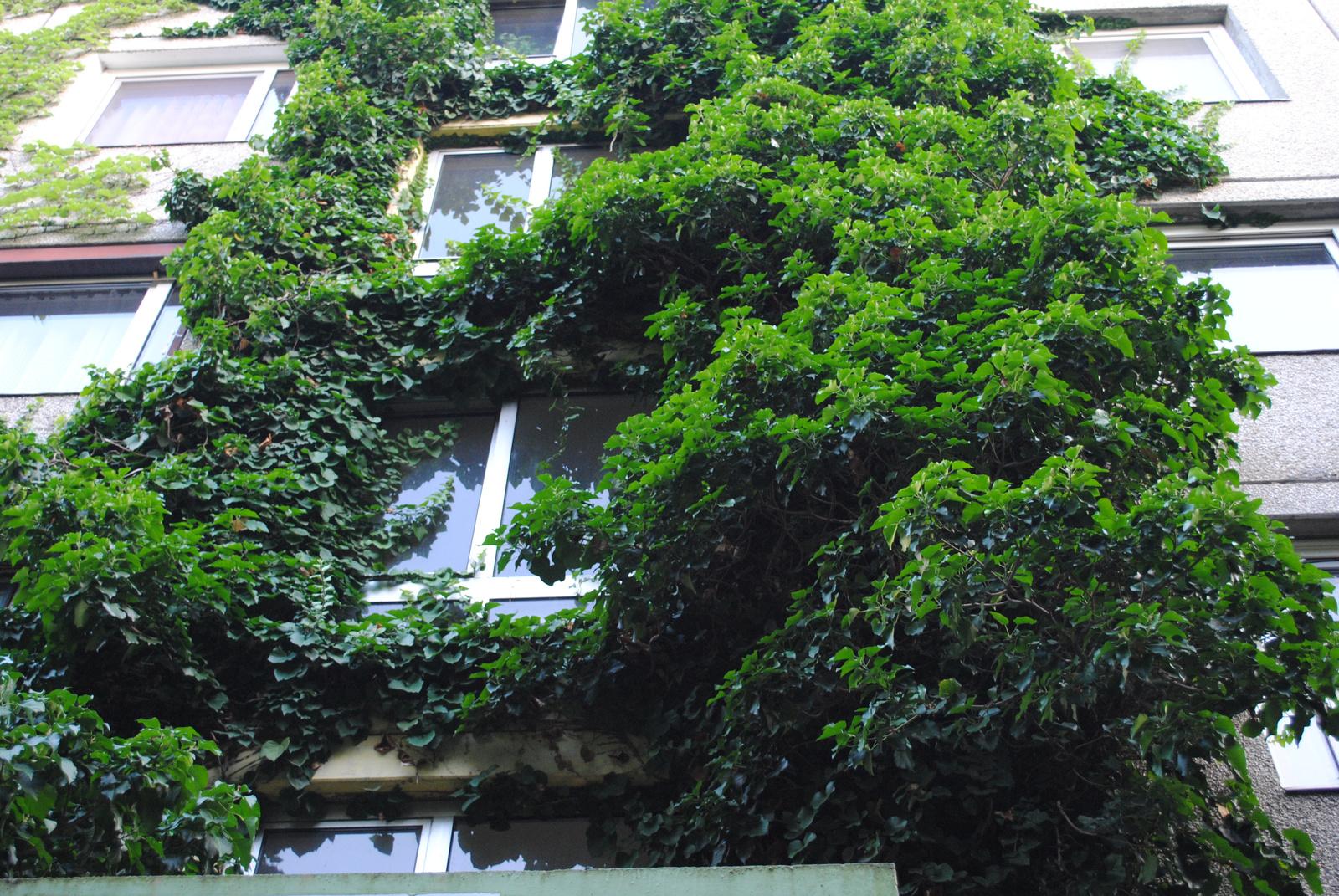 zöld falburkolat